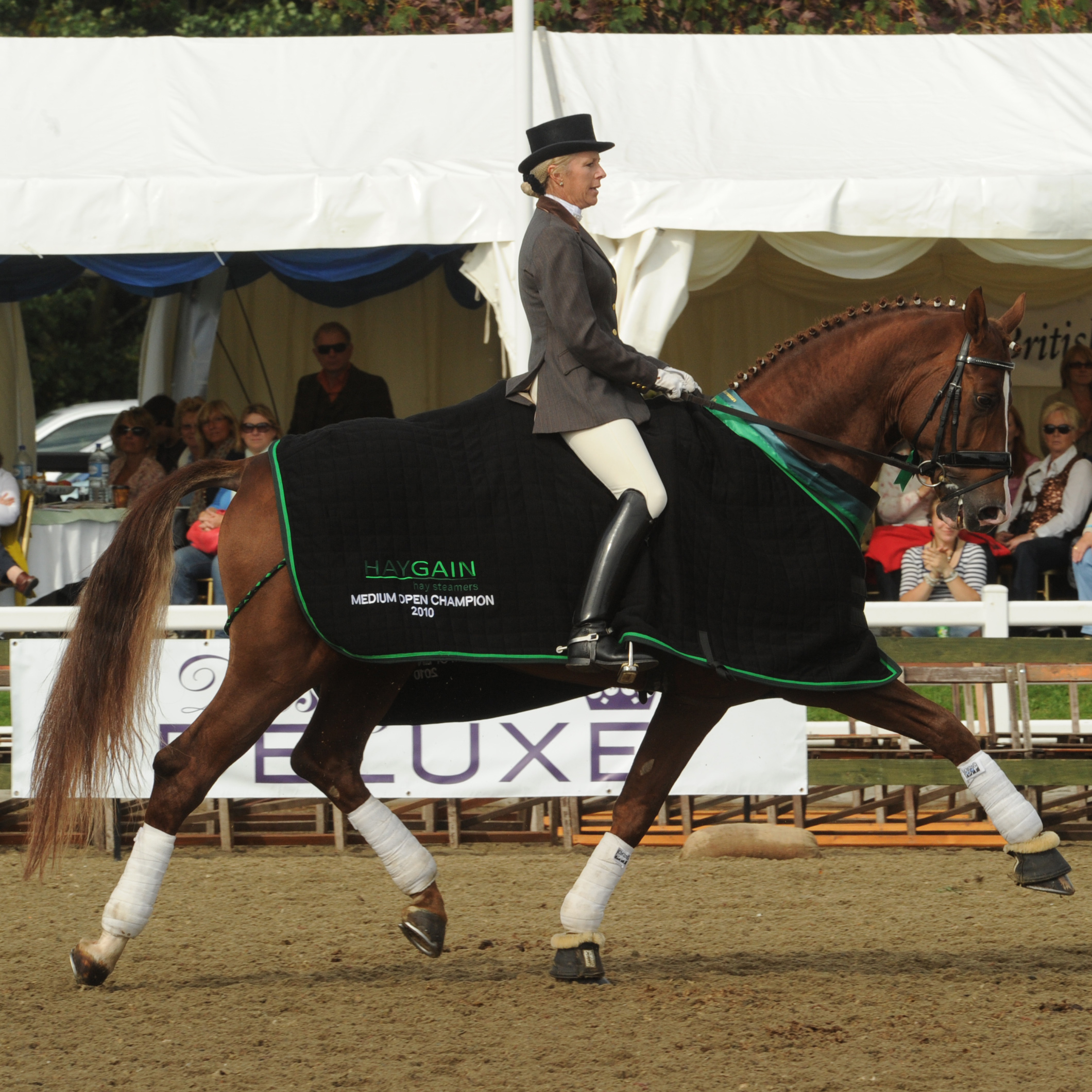 Selling your horse with OEC Dressage Worldwide